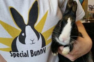 Special Bunny at Bunny Party! 2015